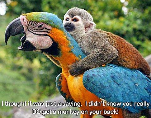 monkey-on-parrot-back