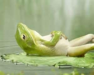 frog-stomach-full